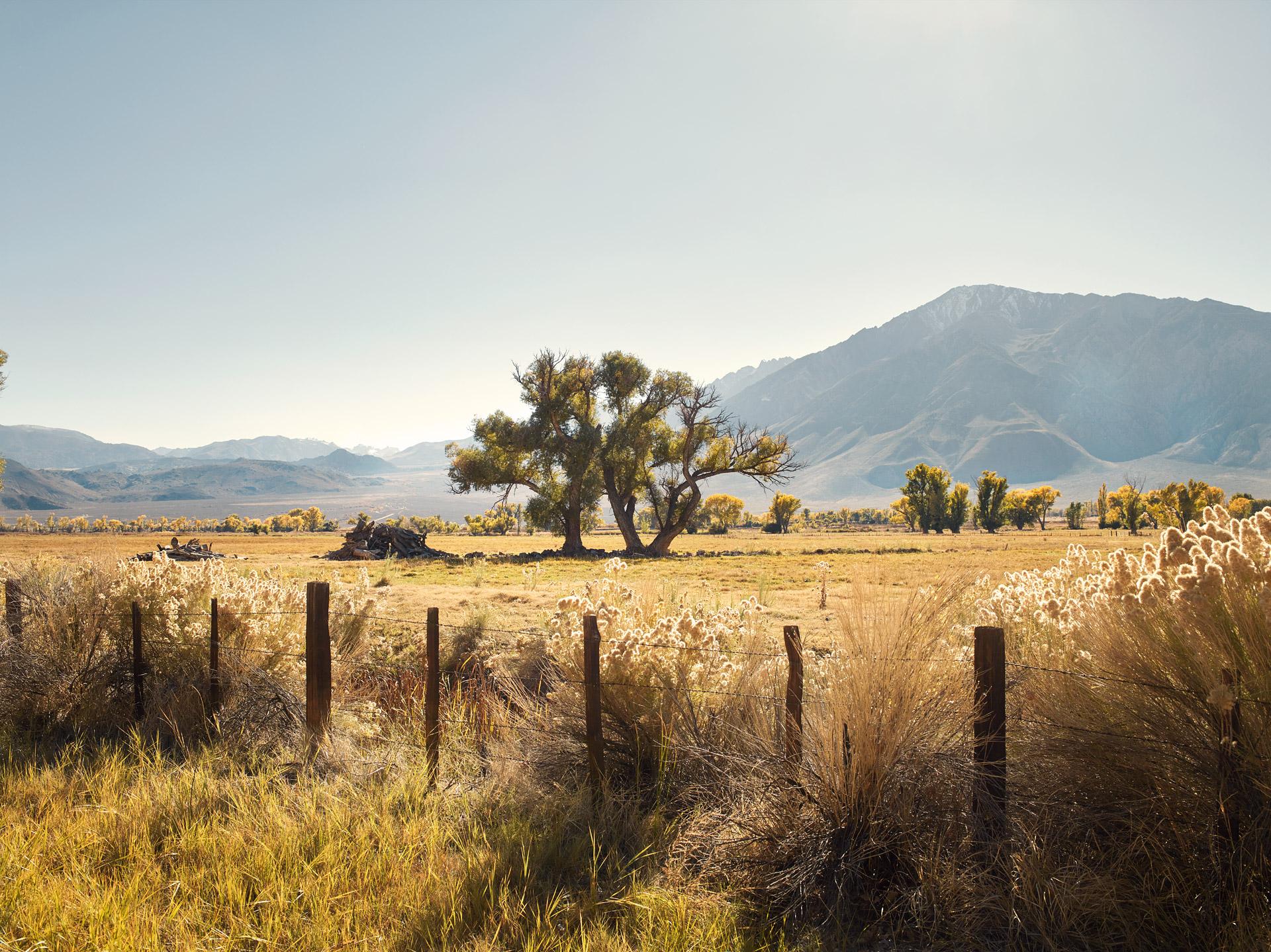 CA_LandscapeCF006448
