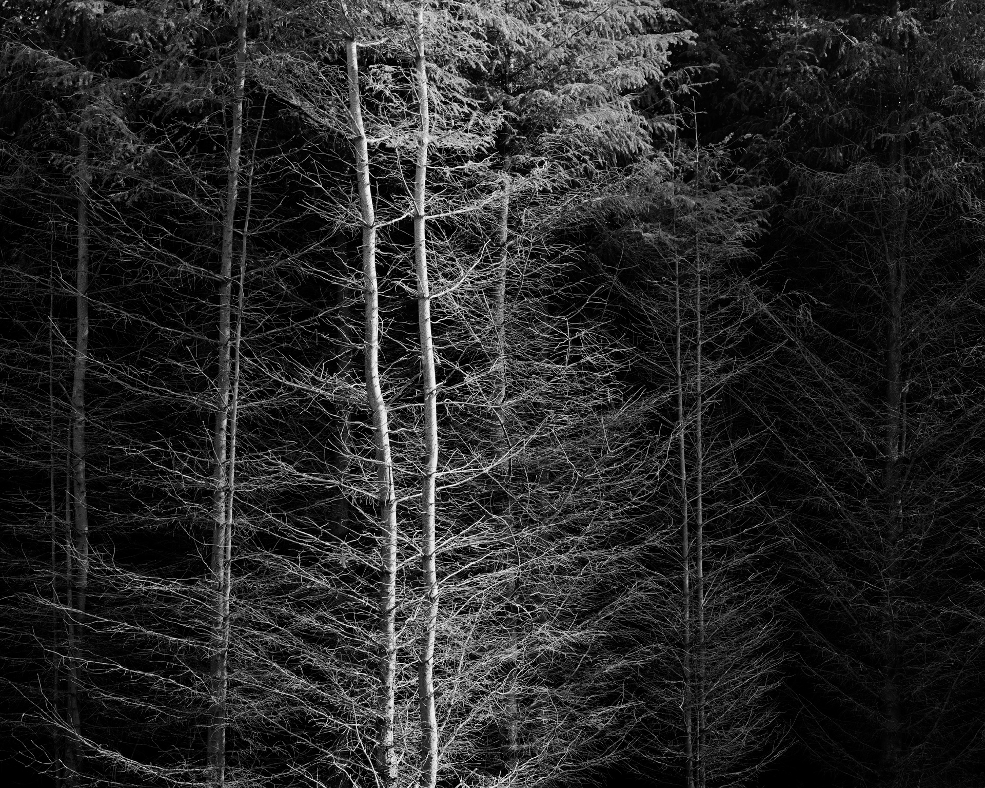 arc_BWTrees_01