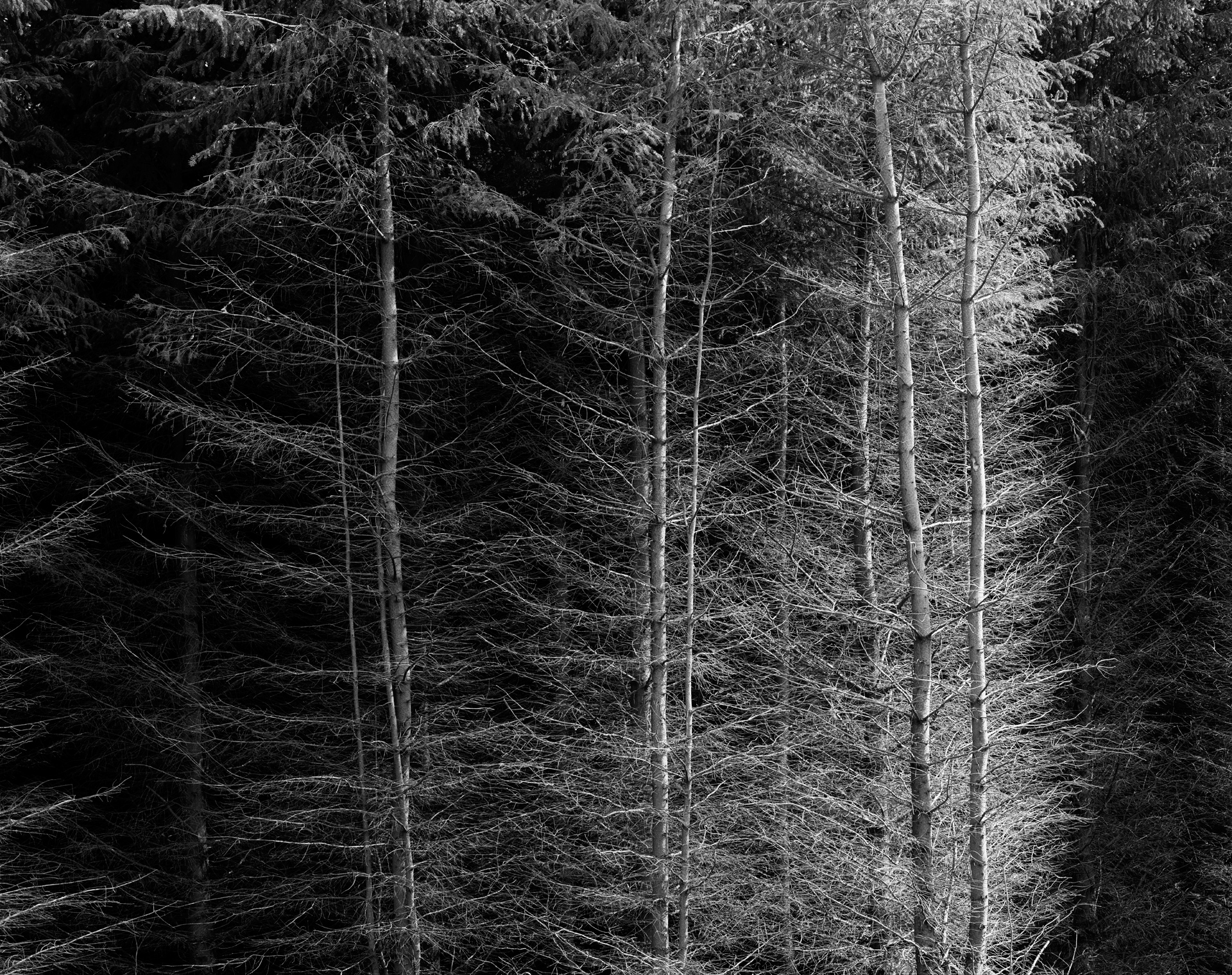 arc_BWTrees_02