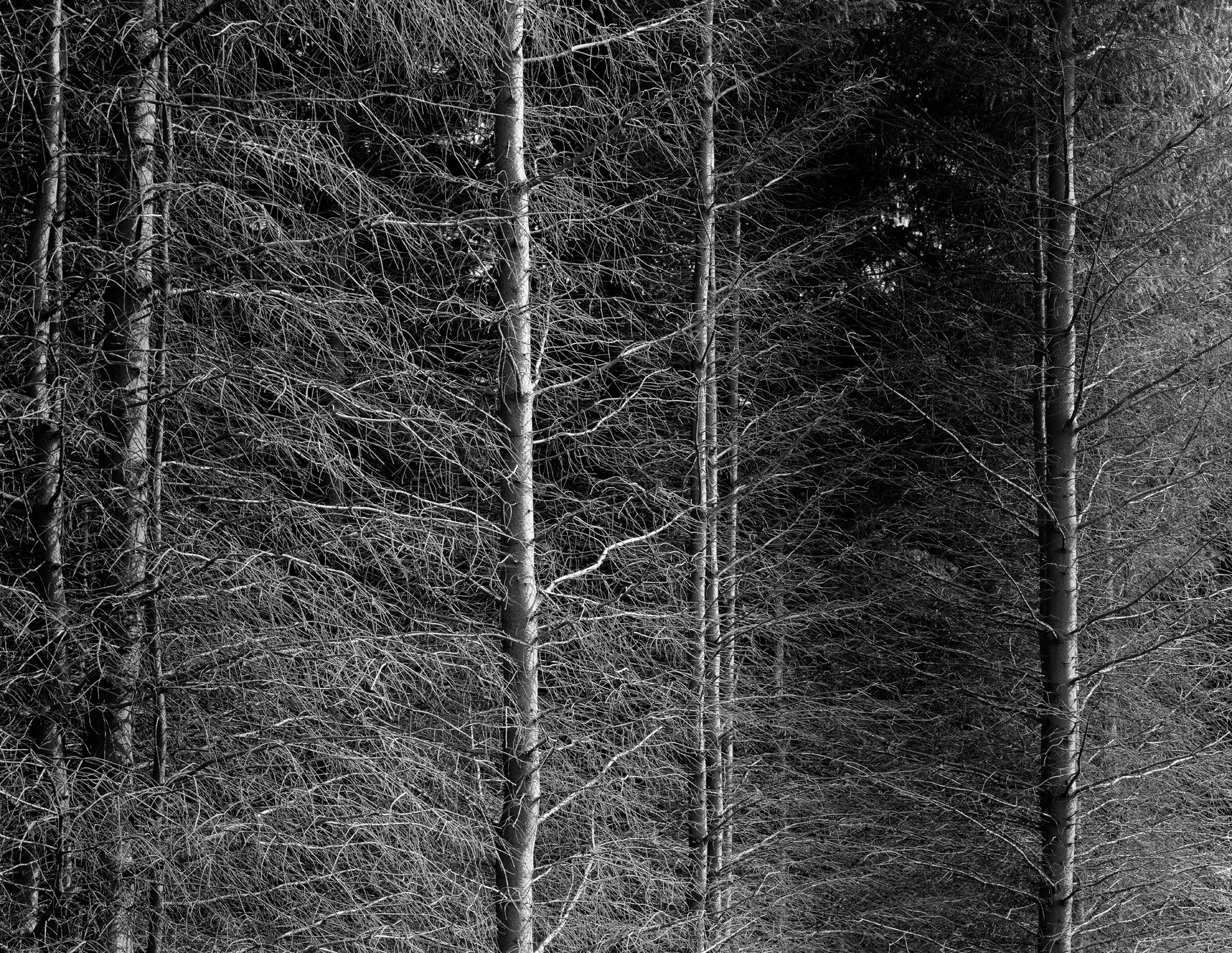 arc_BWTrees_03