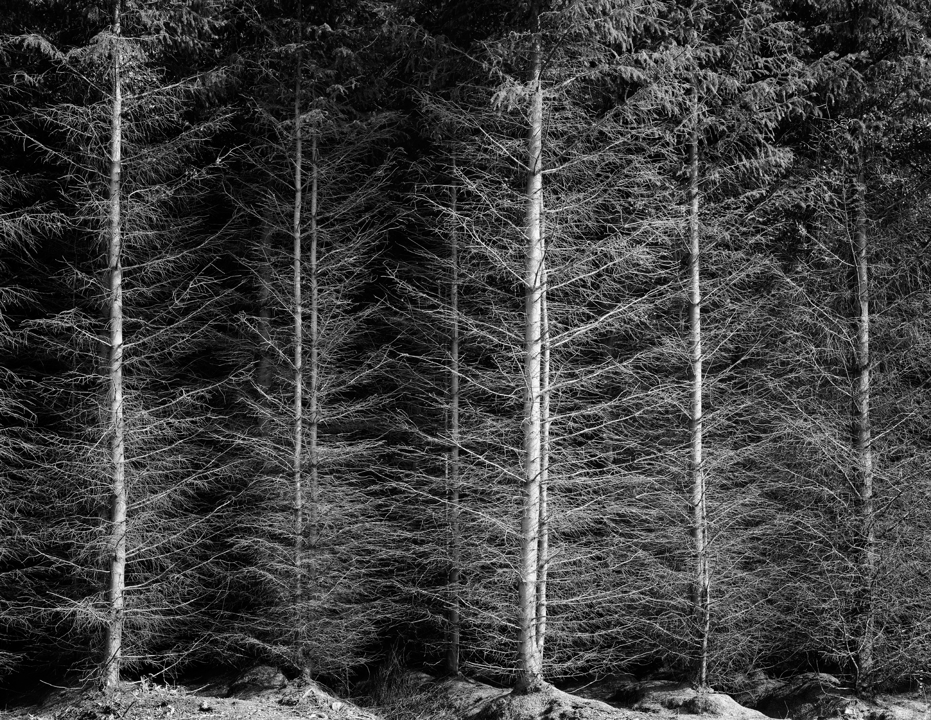 arc_BWTrees_04