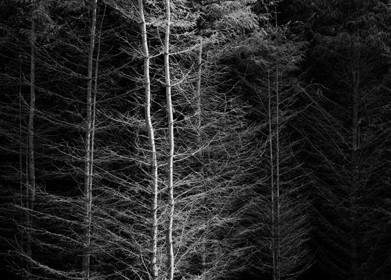 Trees n Landscapes